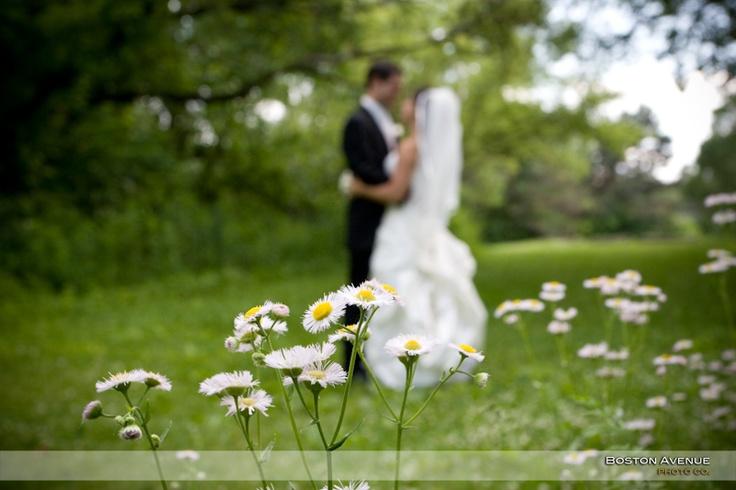 field of wild daisies :)