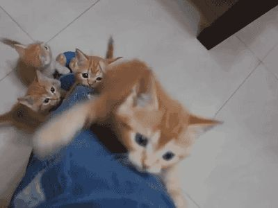 Lead kitten: 'C'mon guys. Dig your claws in so you get a good grip. We're nearly at the top!' Human: 'Ah-h-h-h-h-h!!!!'	 20 Things Only Cat People Would Understand