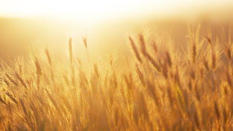 Hooikoorts Hooikoorts is een veel voorkomende, allergische reactie op het inademen van stuifmeelpollen. Het aantal mensen dat last heeft van hooikoortsverschijnselen neemt de laatste jaren sterk toe.