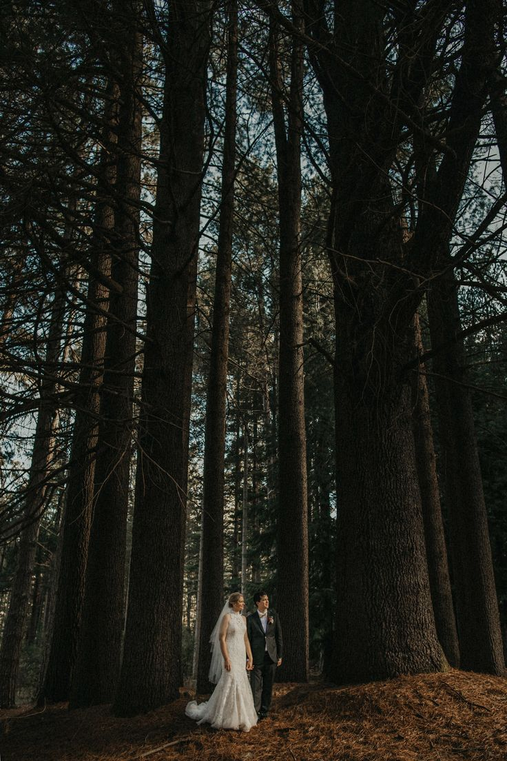Tumbarumba Wedding   Sugar Pine Walk  Wedding  Snowy Mountains Wedding Photographer