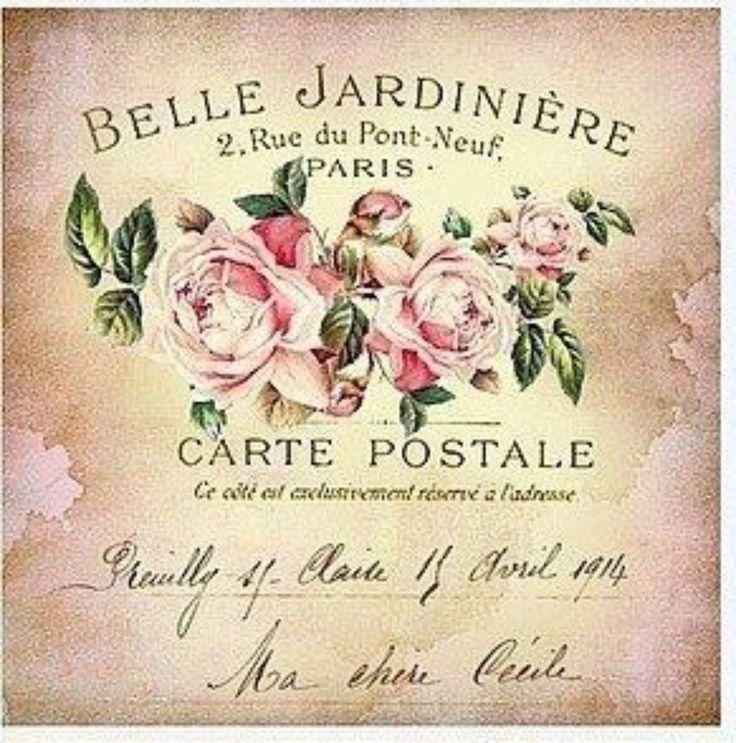 Rosa carte postal Provence.