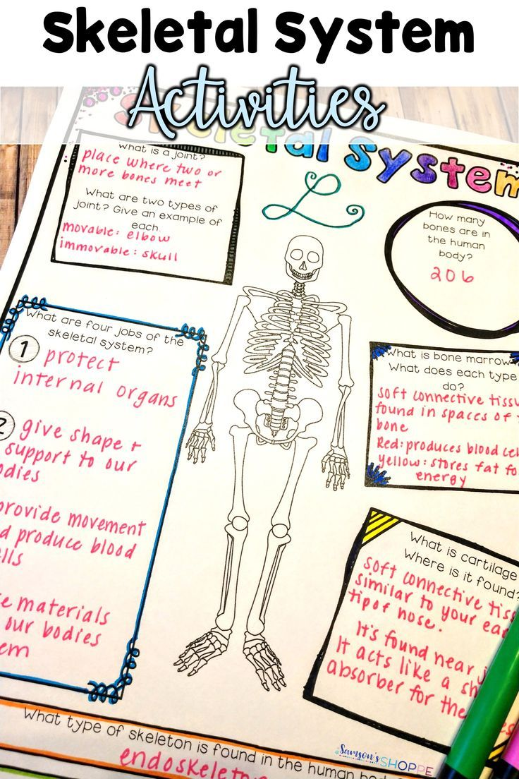 Skeletal System Nonfiction Article And Doodle Sketch Note Activity