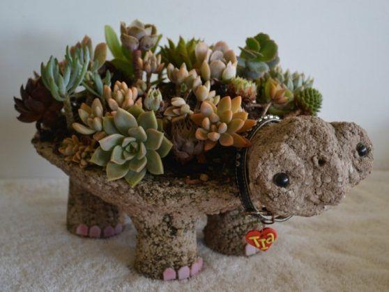 Indoor Succulent DIY Ideas