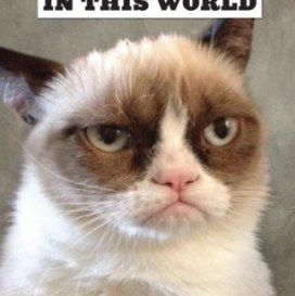most angry cat in the world 272x273