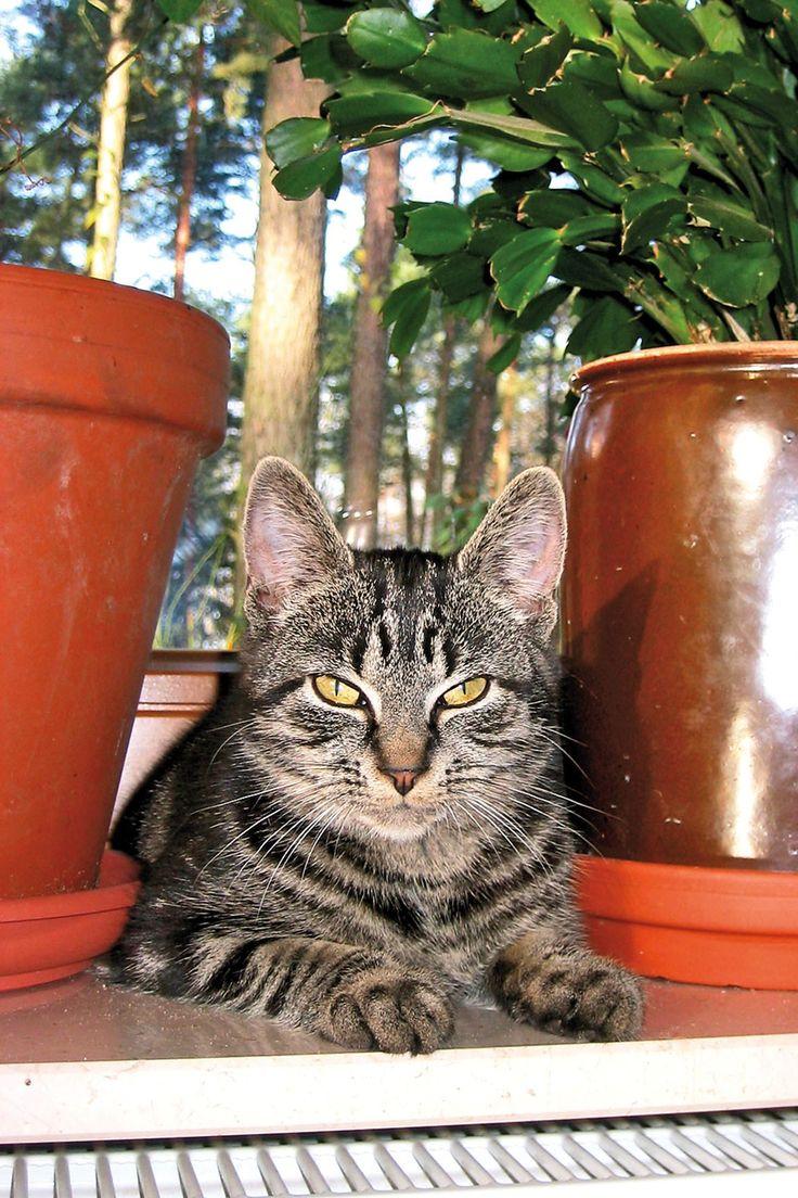 Katzengras Für Hunde