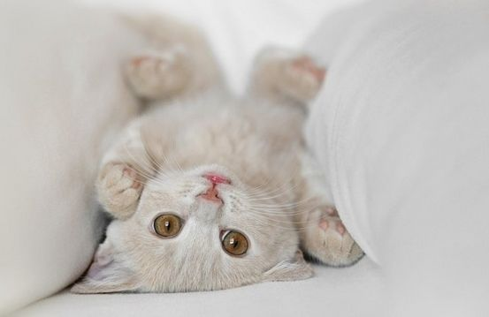 cute cats and kittens   Cute Cute Kitten