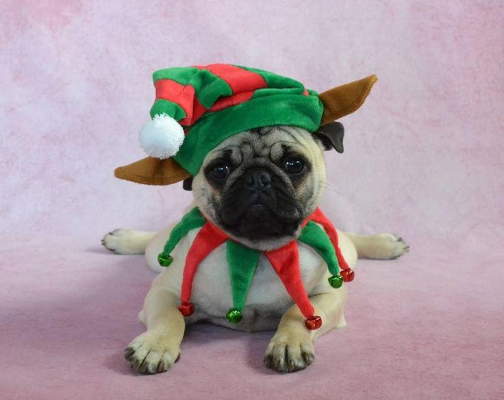 Best 25+ Dog christmas costumes ideas on Pinterest | Cat ...