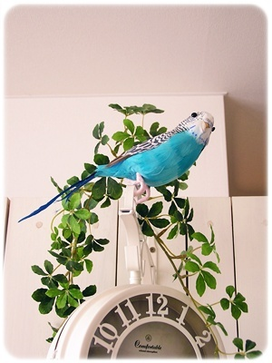 A fortunate bluebird   http://www.roomflavor.com/room.php?7425