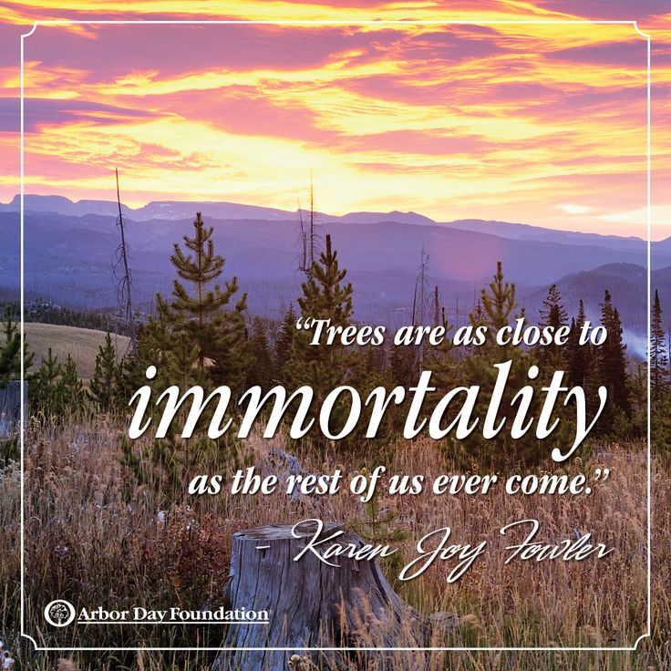 Best Nature Quotes: 153 Best Tree & Nature Quotes Images On Pinterest