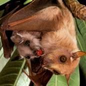 Bat Conservation International.