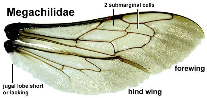 Cores e texturas da capa