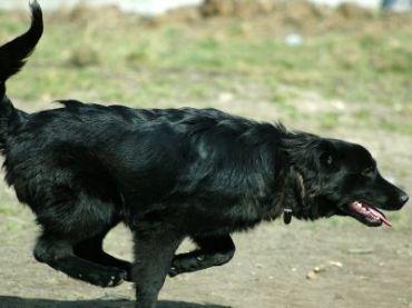 German Sheprador Dogs Pinterest Dog