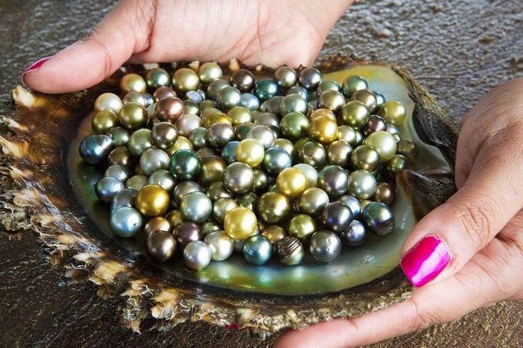 Just A Few Of The April 2014 Civa Pearl Harvest Fiji