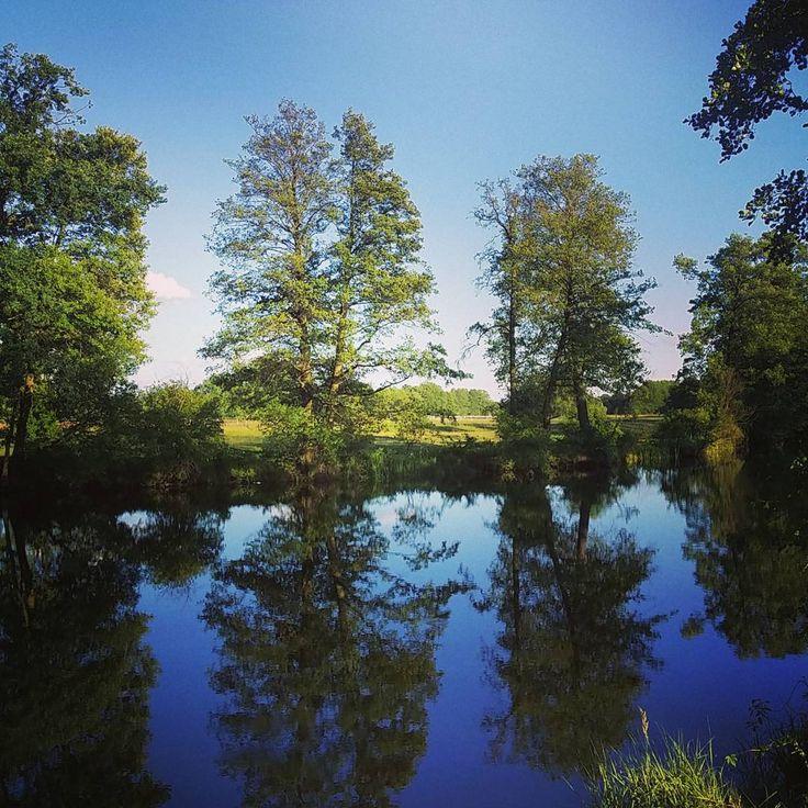 Woda z rana jak śmietana. Nie mylić z tym drugim napojem.  #neirawypełzaznory #dzieńdobry #pięknapogoda #jezioro #Polskajestpiękna #woda #słońce #słonecznydzień #dobreżycie #szczęście #natura #piękno #przyroda #las  #goodmorning #beautifulweather #lake #forest #water #sun #sunnyday #happiness #Polandisbeautiful #beautifulday #nature #landscape #goodlife #happy