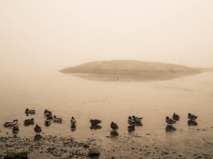Duck by Lidia, Leszek Derda on 500px