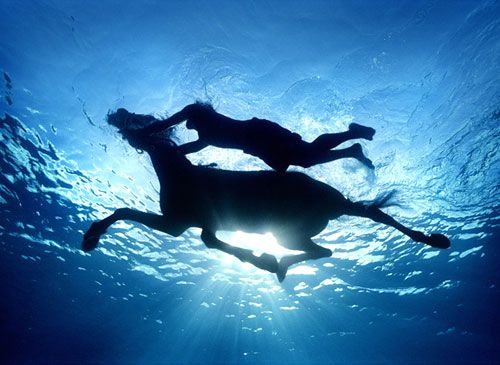 swimming with horses: Buckets Lists, Horses, Blue, The Ocean, Swim, Underwater Photography, Zena Holloway, Zenaholloway, Animal