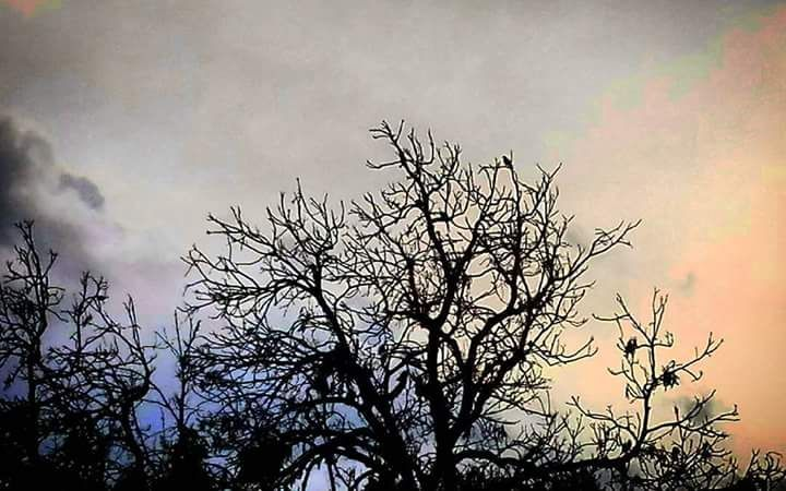 A Gilinber Terán in memóriam. La luz brillante del atardecer hizo un violento fundido a negro. Los colibrís detuvieron sus alas los loros callaron su graznido. Una triste canción de cuna una nana c…