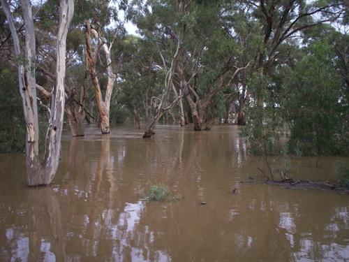 Strips of flood