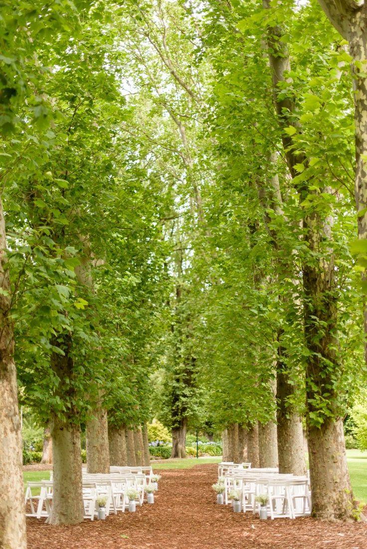 FITZROY GARDENS  |  PLANE TREE WALK