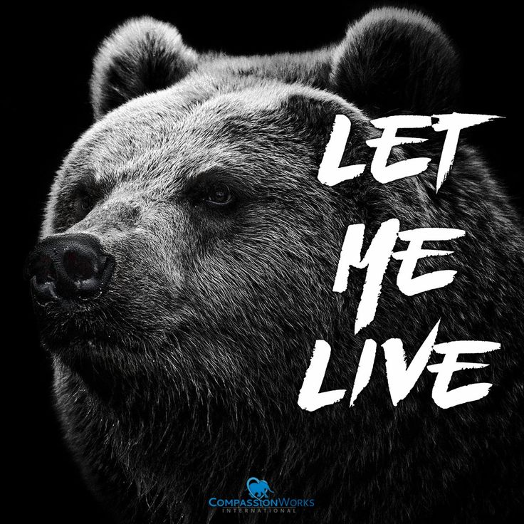 CompassionWorks Intl‏ @CWIntl     Lions and tigers and bears... are all hunted for trophies.    It's time to take a stand. Will you join us?    HELP: http://rallyforcecil.org