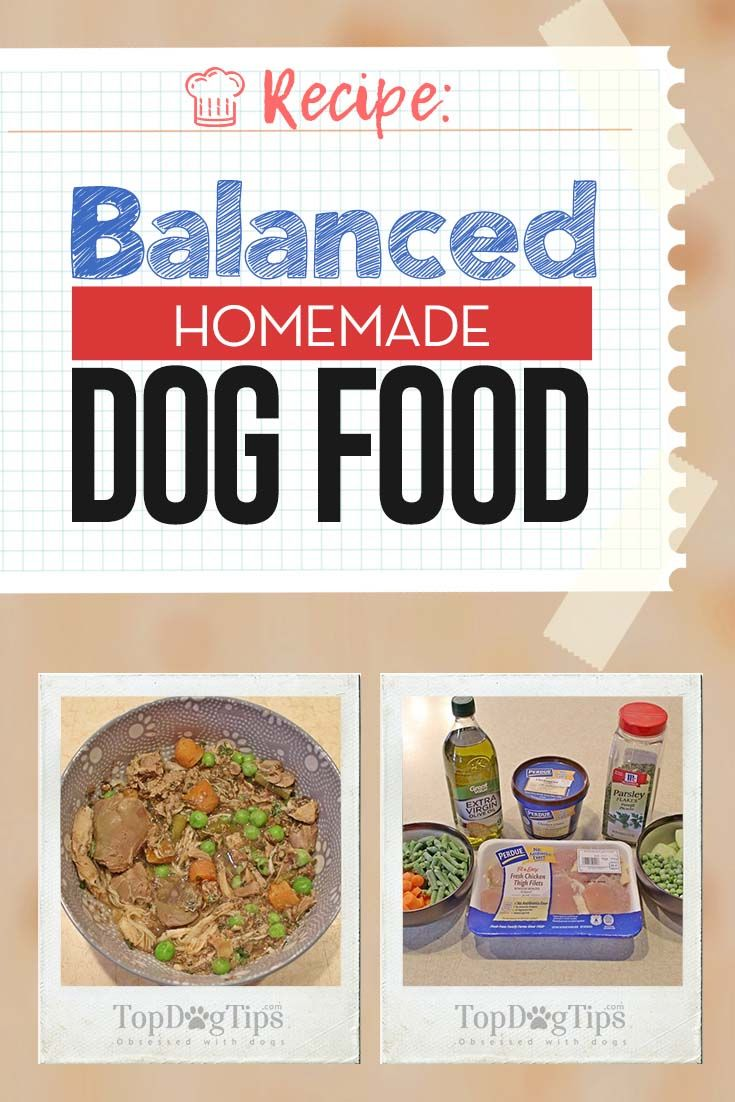 Making Homemade Dog Food As A Complete And Balanced Diet For Dogs
