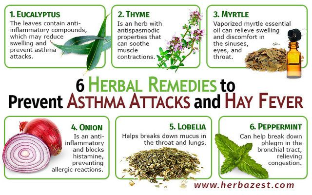 6 Herbal Remedies to Prevent Asthma Attacks and Hay Fever | herbazest.