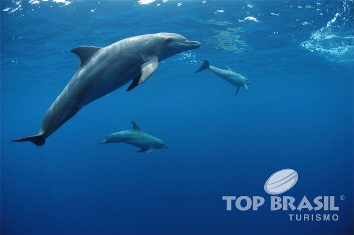 Pacotes para Fernando de Noronha - Golfinhos