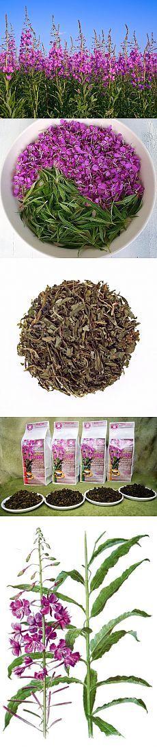 иван чай от 100 болезней