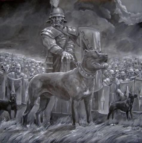 Historical pic art, Cane Corso Roman gladiator warrior dogs