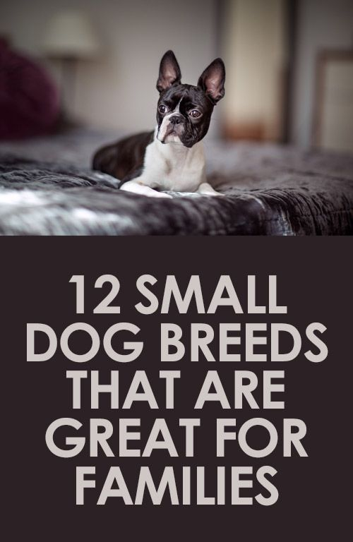 12 Small Dog Breeds That Are Great for Families http://iheartdogs.com/12-smaller-size-dog-breeds-that-are-great-for-families/