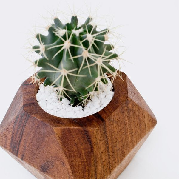 Geometric planter and plant