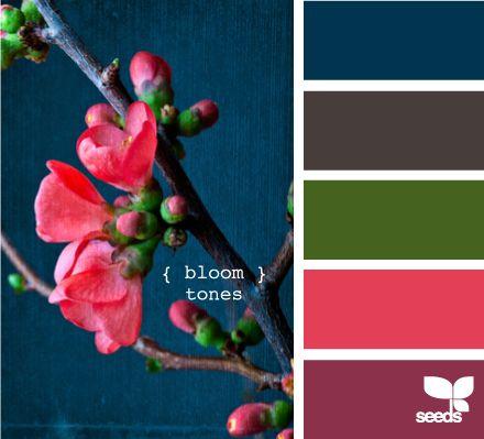 Bloom coloursColors Combos, Pink Flowers, Bloom Tone, Design Seeds, Blue Living Rooms, Colors Palettes, Living Room Walls, Colors Schemes, Jewels Tone