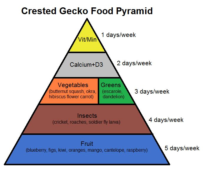 learn about crested gecko nutrition with this food pyramid!