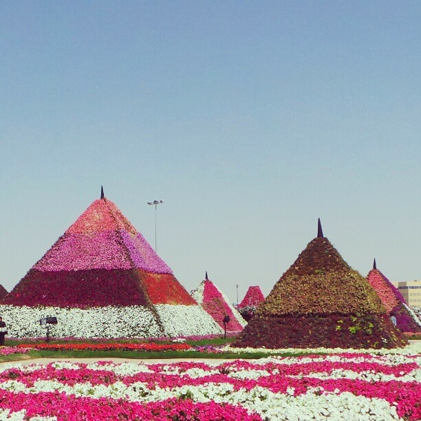 Dubai Miracle Garden. Photography: Abdulla Al-Buqaish  #popular #dubai #sheikh #travel #arabs #uae