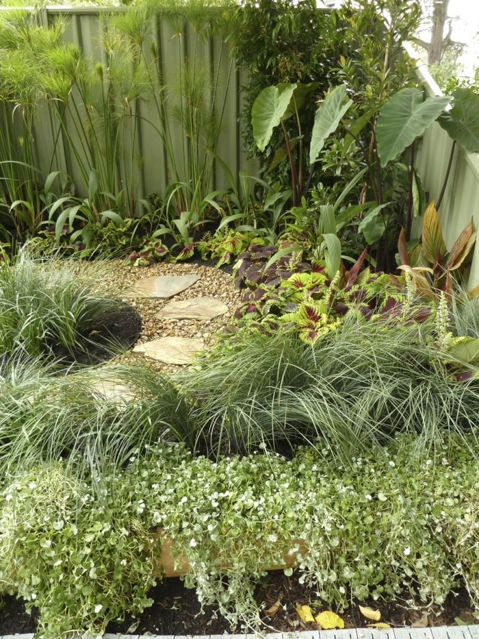 56 best Cool Climate Tropical Garden images on Pinterest Garden