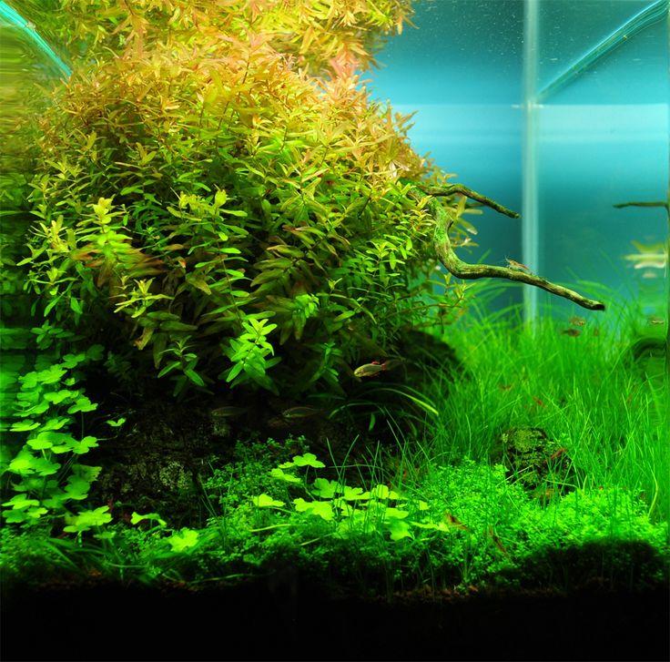 aquarium aquascape design ideas 715 best aquarium images on pinterest aquarium ideas planted