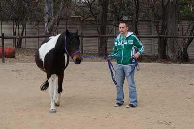 Teambuilding through Horses