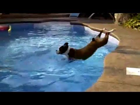 44 Best Dog Days Of Summer Images On Pinterest Puppys Adorable Animals And Animals Dog