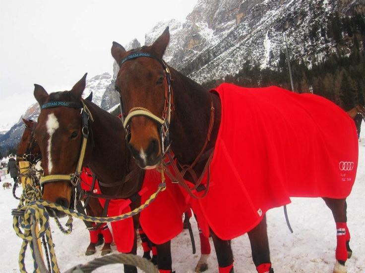 #Audi polo Winter Cup - Cortina D'Ampezzo 2013