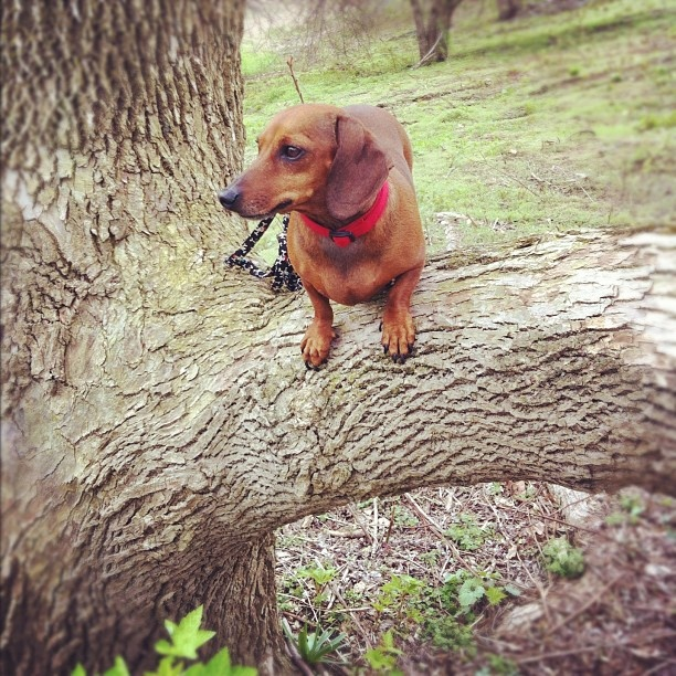 Brutus in a tree: Brutus, Trees, Animal
