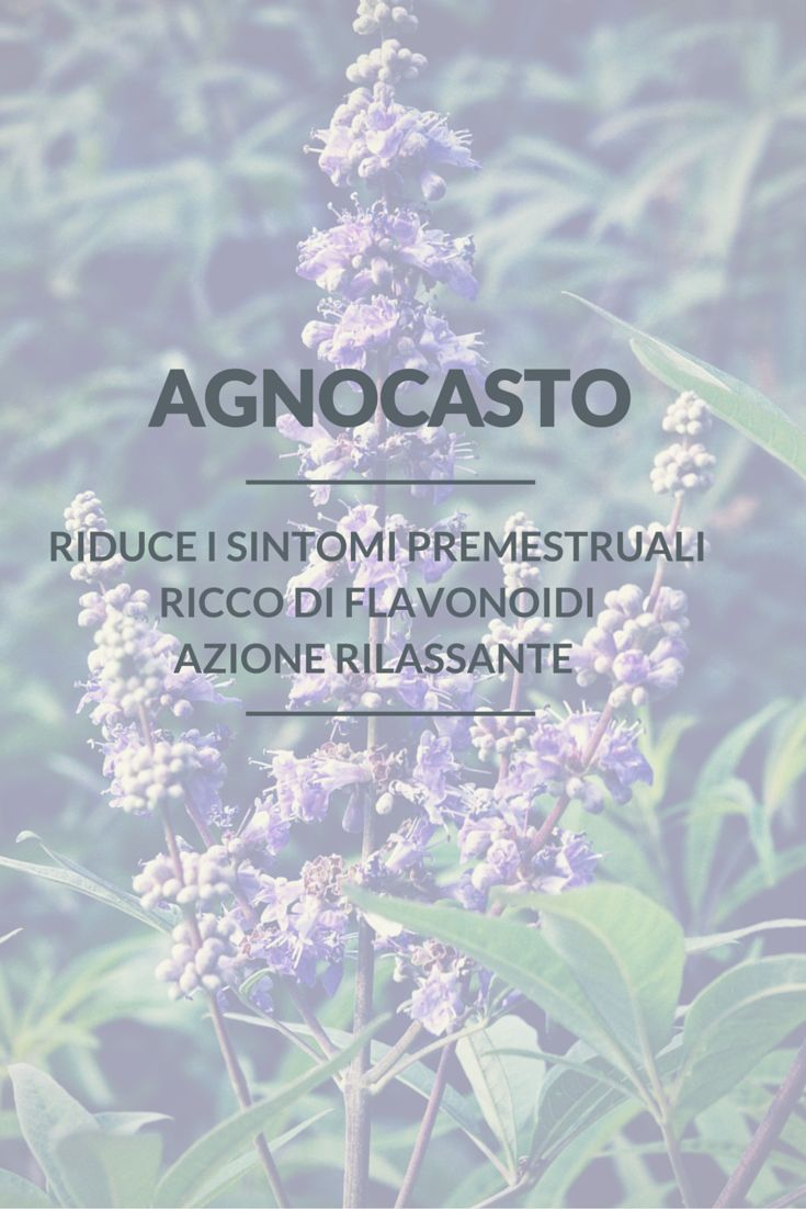 Le informazioni utili sulla pianta #AGNOCASTO . È molto utilizzato in #erboristeria per le sue #qualità #terapeutiche... per  sapere di più sull'agnocasto scrivetemi nella chat di pinterest. Buona Giornata Follower