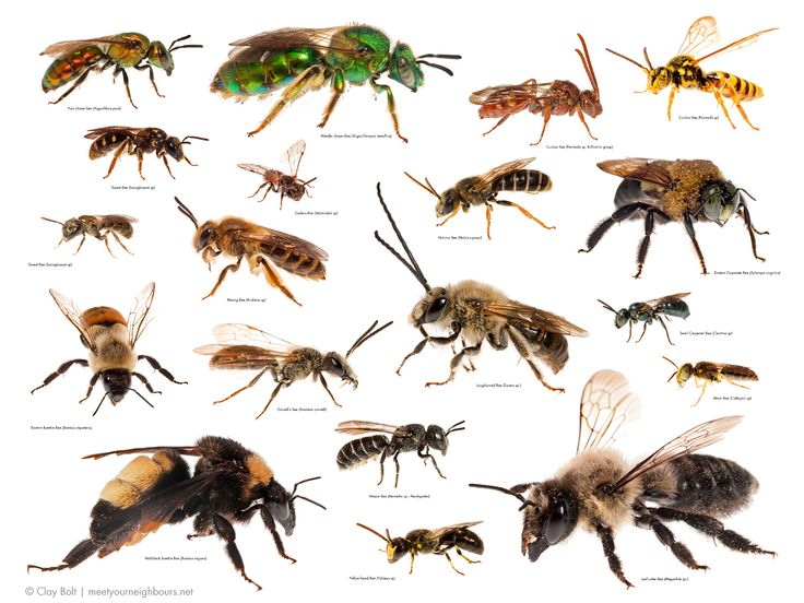 a look into the social organization of honey bees