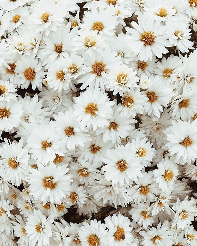 They Remind Me Of Daisies Daisy Wallpaper Flower Aesthetic Instagram Aesthetic