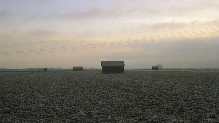 Pohjanmaan lakeuksilla | Elinympäristöt | Oppiminen | yle.fi