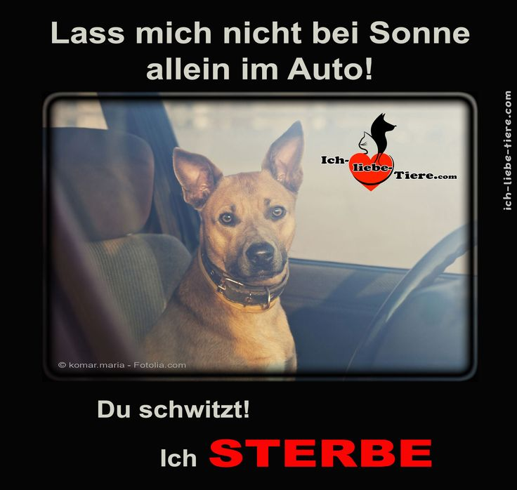 Lass mich nicht bei Sonne allein im Auto! Du schwitzt! Ich sterbe! >>> http://www.ich-liebe-tiere.com/ <<<