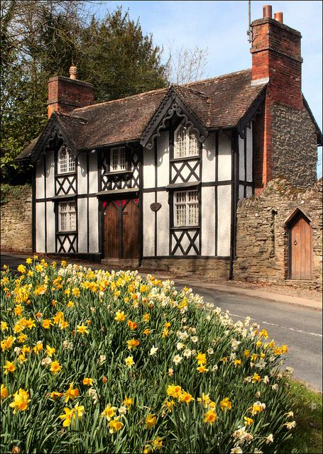 """Shropshire in Spring    A cottage in Shropshire and some seasonal Spring daffofils, Very """"Country Life""""."""