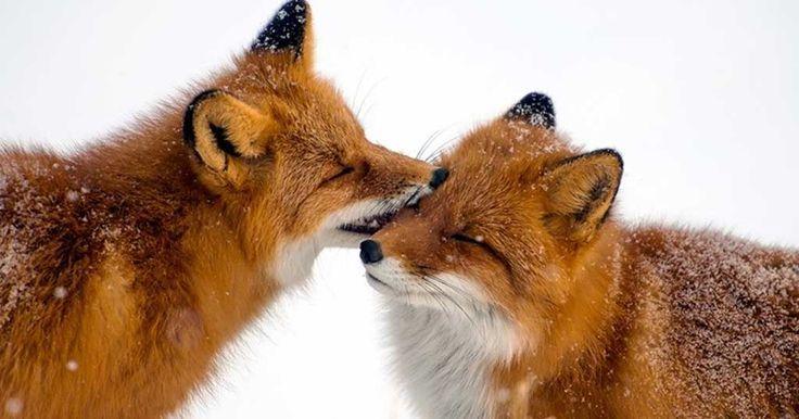 10 ζώα τα οποία ξέρουν πραγματικά τι σημαίνει αγάπη και πίστη
