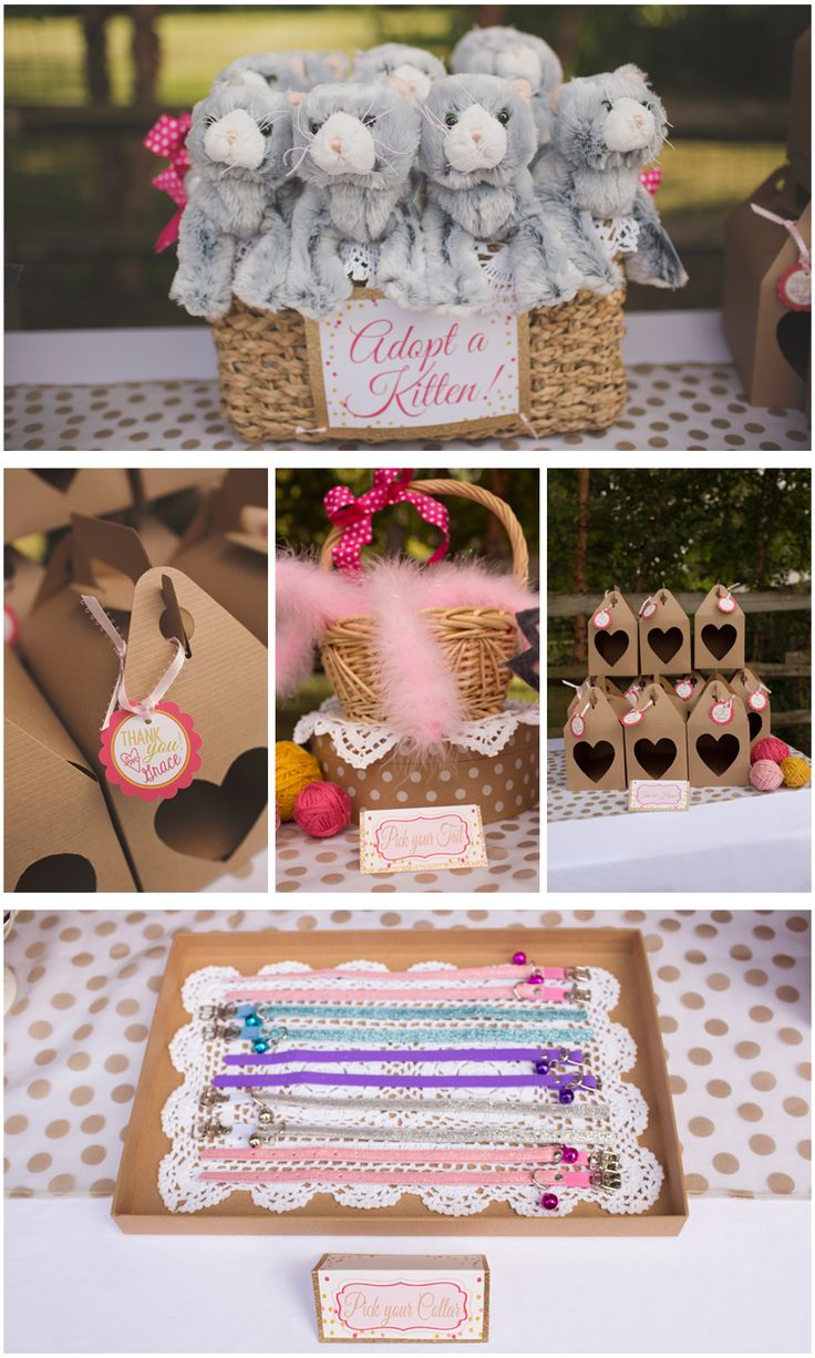 Little Miss Purrr-fect turns 7! » Jamie Evelyn Photography