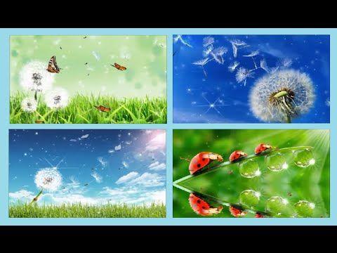 TO NO VIDEO: Vídeos de fundo natureza 4 melhores Nature Backgro...