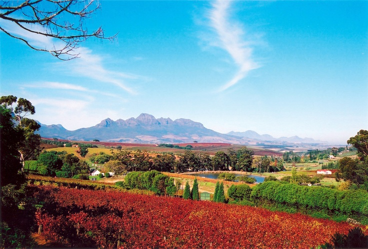 Cape - Winelands
